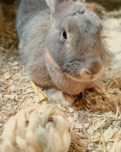 Thumper the Rabbit